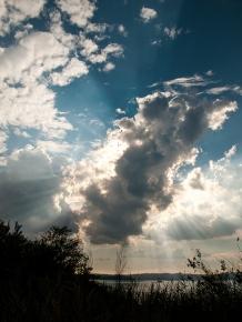 Echte Strahlenbüschel am Gardasee ...