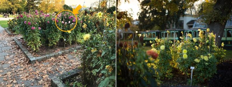 Olgas Stelle in den Blumen und die Sicht zur anderen Seite